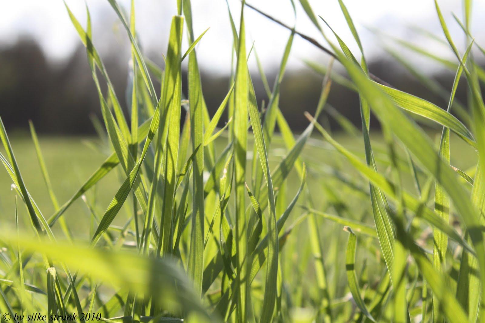 Symbolbil: der audiophile Genusshörer kann Gräsersorten am Geräusch beim Wachsen erkennen.