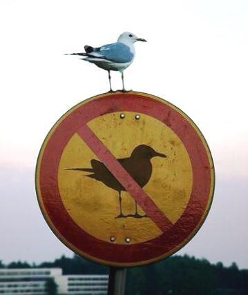 vogelverbot