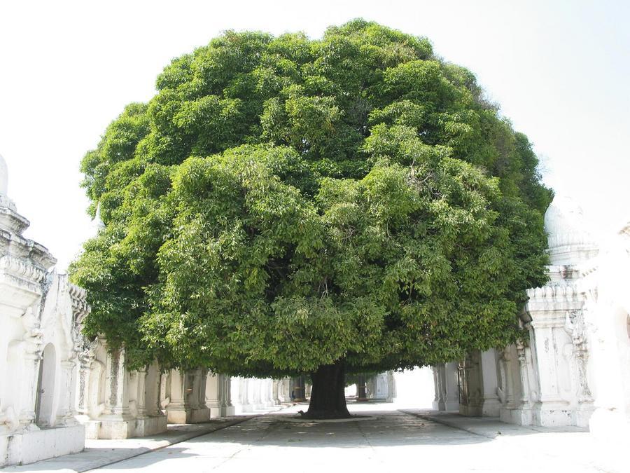 Symbolbild: Baum.