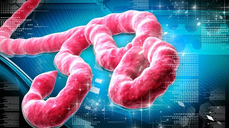 Ebola in Berlin ausgebrochen?