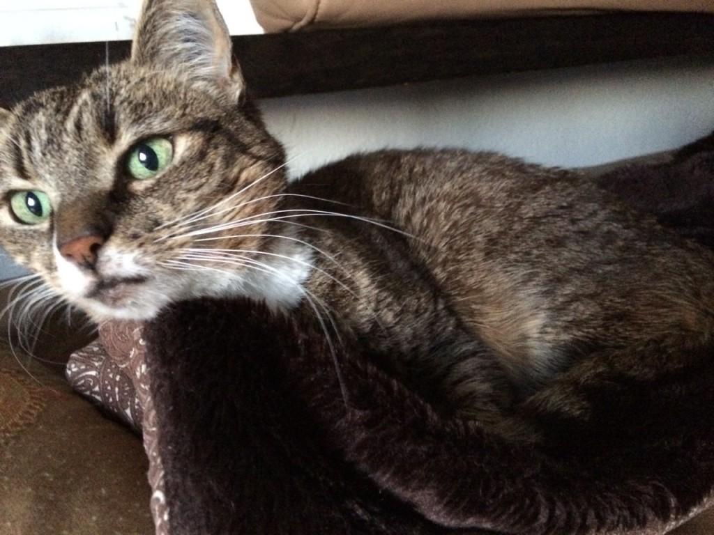 Symbolbild: Katze Padmé beim Relaxen gestört.