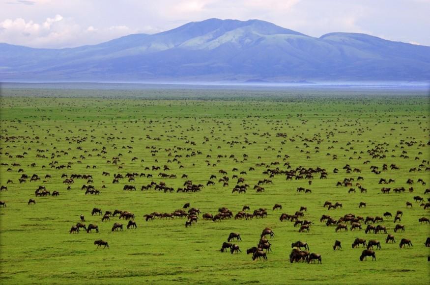 Tansania verkauft Land der Masai an Dubai für Jagdrevier der Königsfamilie