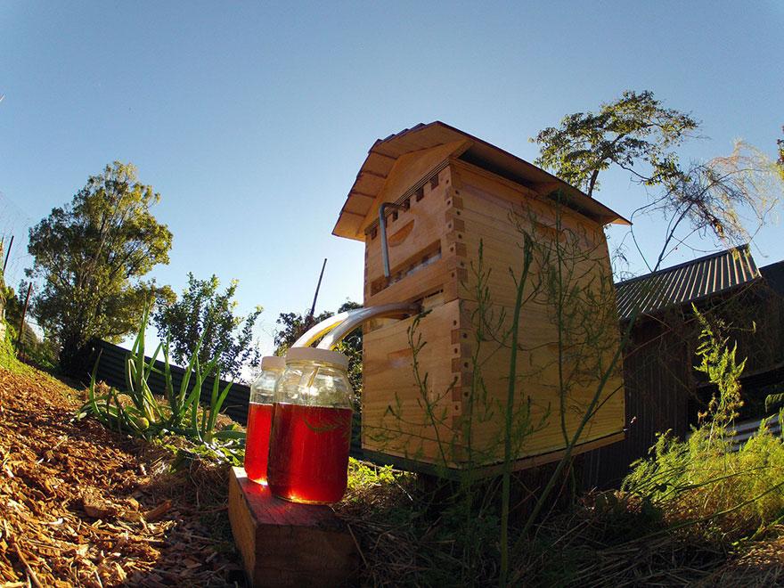 Bienenstock Automat