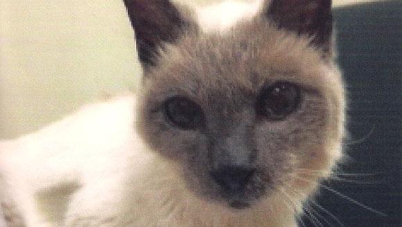 Älteste Katze der Welt: Scooter wurde 1986 geboren.