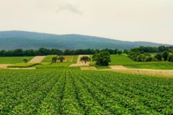 Landwirtschaft-Äcker und die Spekulation